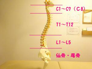 背骨と病気
